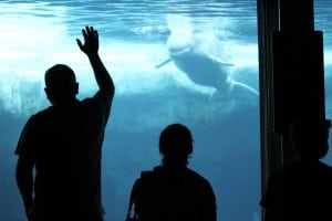Canada outlaws holding whales and dolphins in captivity