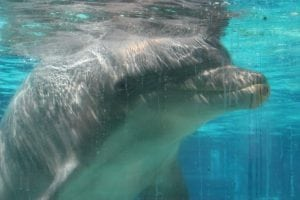 Ending whale and dolphin captivity in the US – how our fight continues