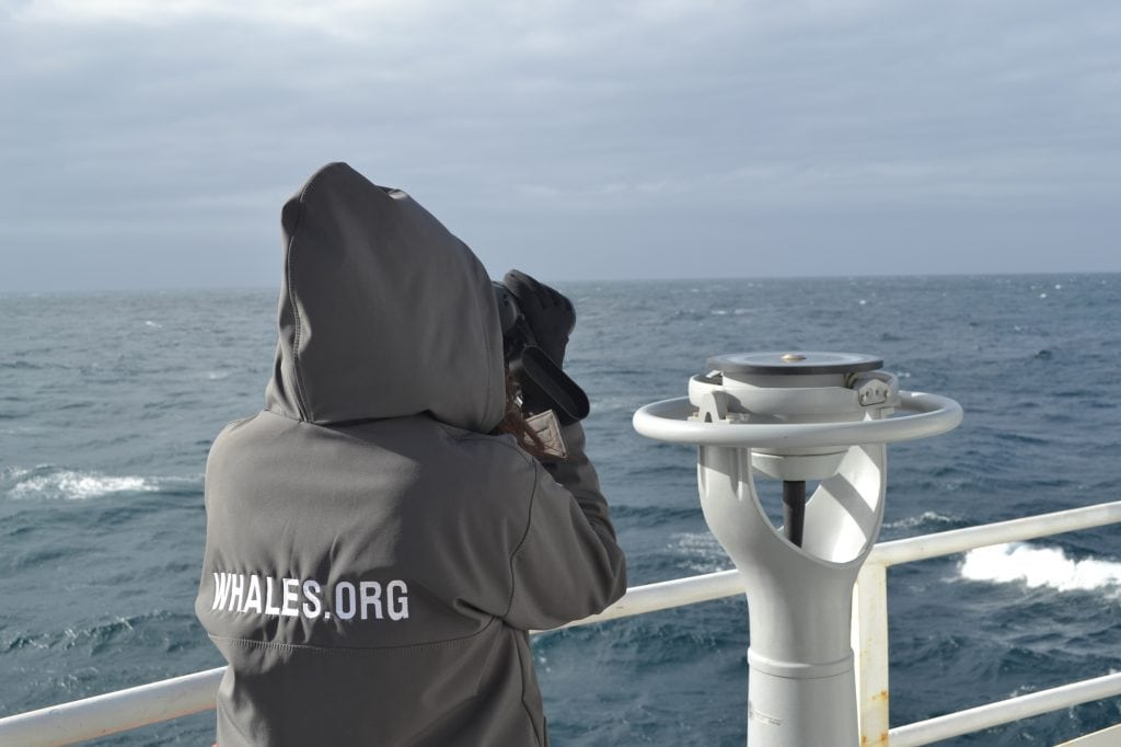 Whale and Dolphin Conservation researcher in Antarctica