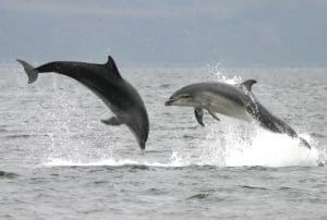 How long do bottlenose dolphins survive in captivity?