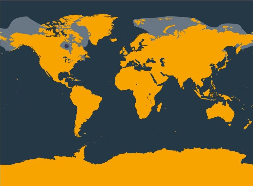 Beluga whale distribution map