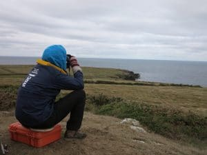 Looking out for dolphins and porpoises in Wales