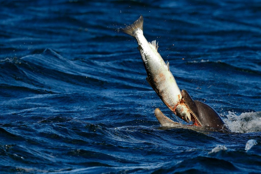 How are dolphins different from fish?