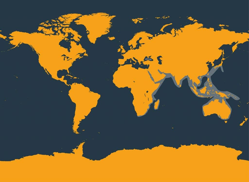Indo-pacific bottlenose dolphin distribution map