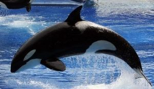 SeaWorld announces death of orca, Kayla, at Orlando park