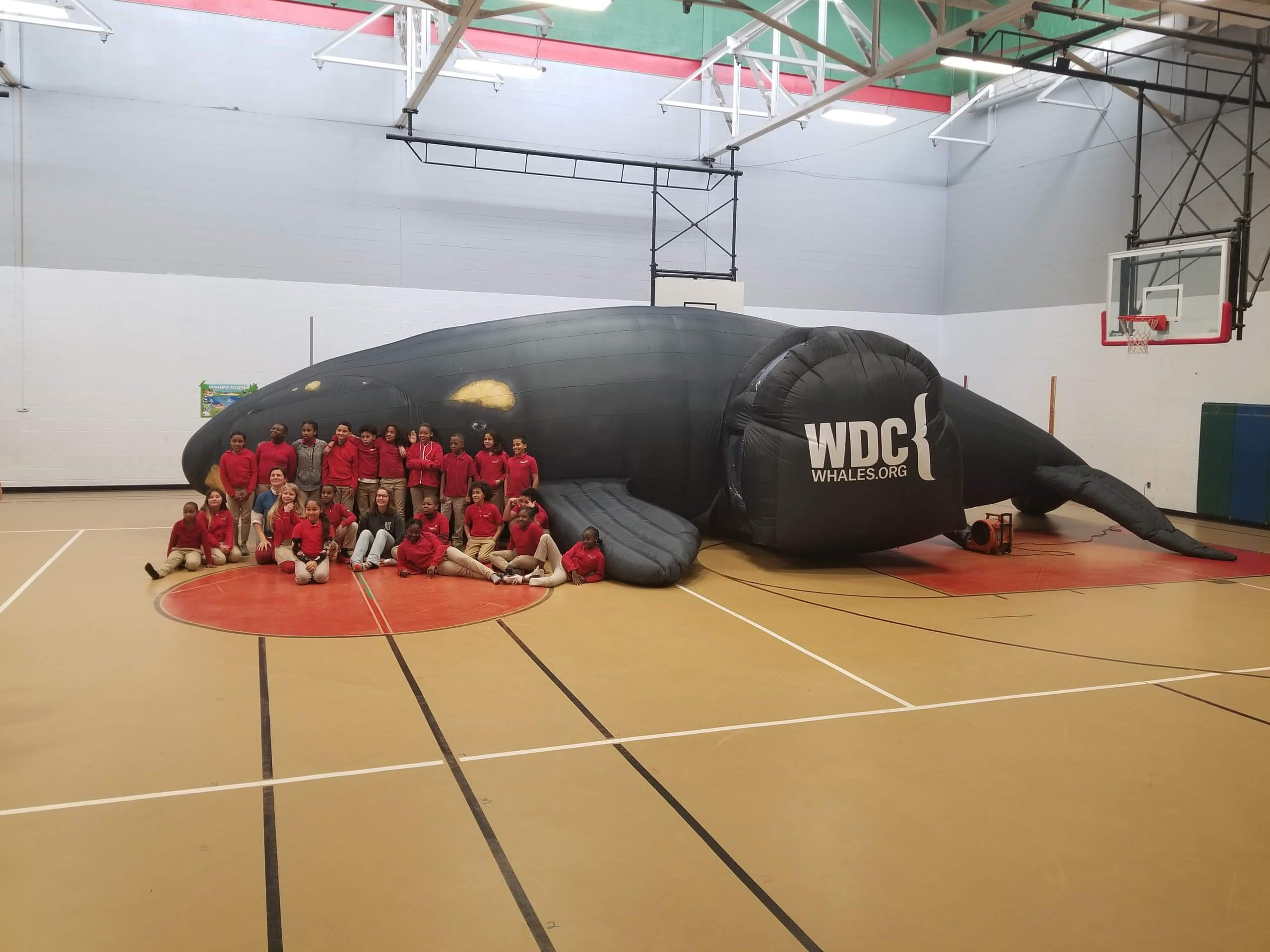 Life sized inflatable whale wih students sitting in front