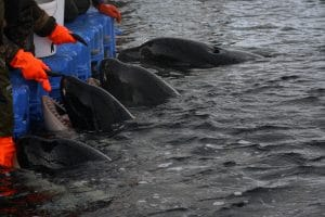 Russian Citizens Call For Action to Prevent Another Whale Jail