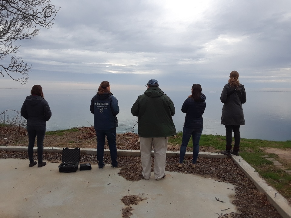 WDC NA Staff watching right whales