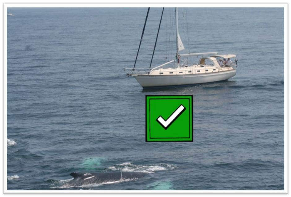 drop your sails good - check box
