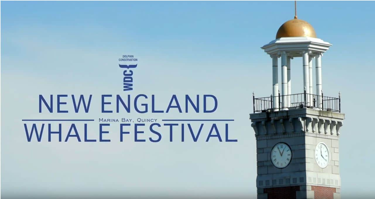 Click the video above to see highlights of 2019's Whale Festival!  Video courtesy of Elie Honein