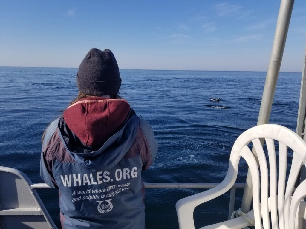 My Gratitude List: Whales, Dolphins, and YOU
