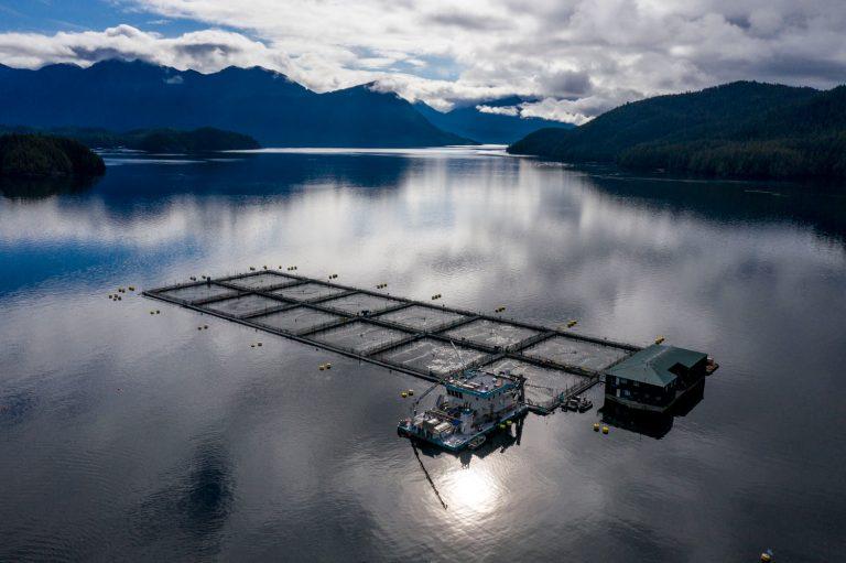 201207-namgis-first-nations-fish-farms-aquaculture-indigenous-foodways-salmon-farm-run-pollution-10-DJI_0066-768x511