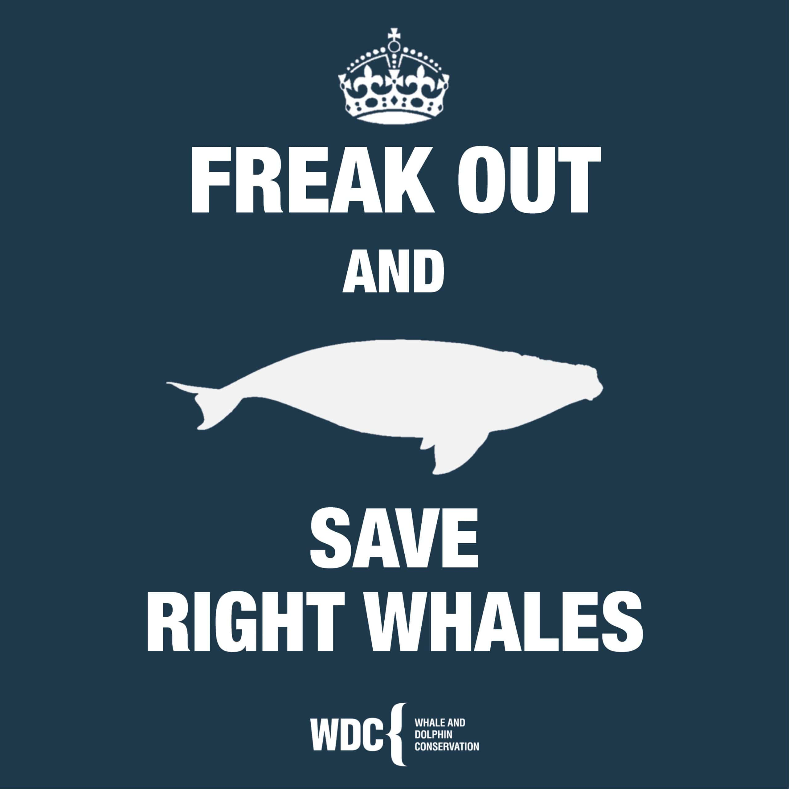 Freak out and save right whales square
