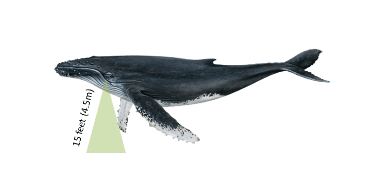 whale sight