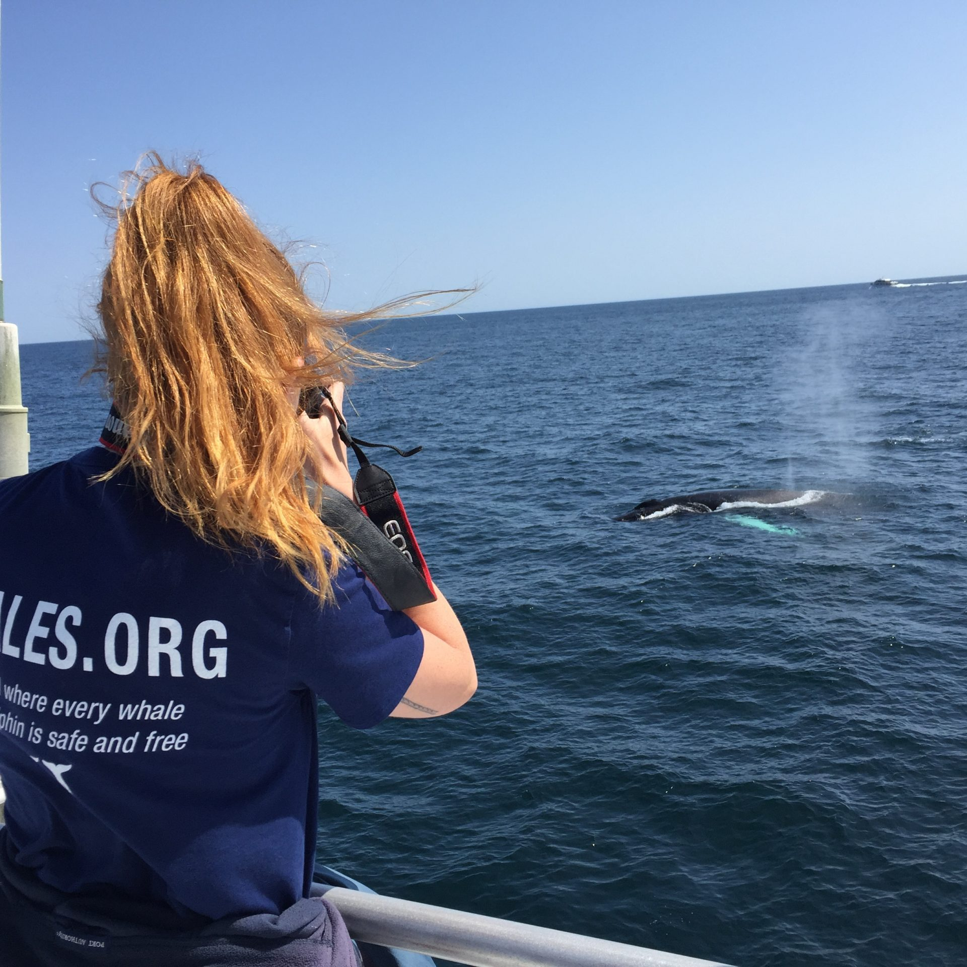 Intern Photographing a Humpback Whale