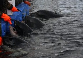 Orcas are crammed together in sickening conditions